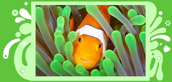 Clownfish for Skype